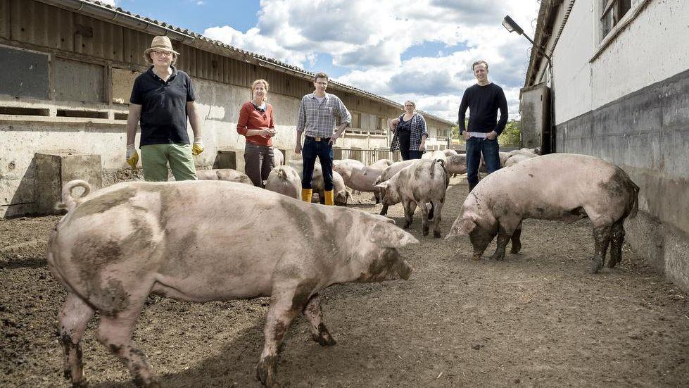 Schwein wir alle ein wieder jahre schlachten Thüringer Schlachtfest
